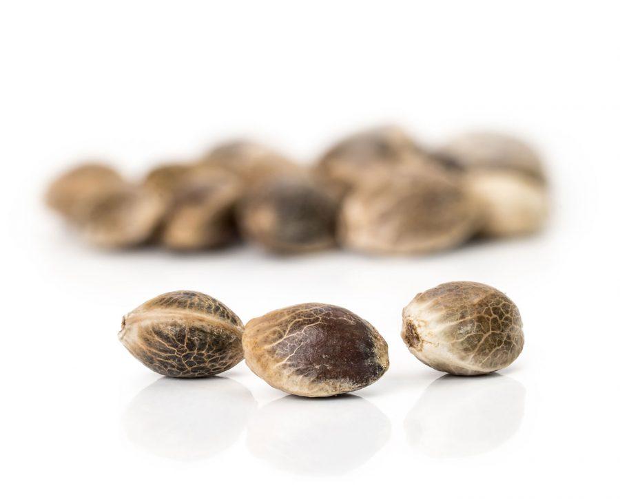 SeedlySignature-Image